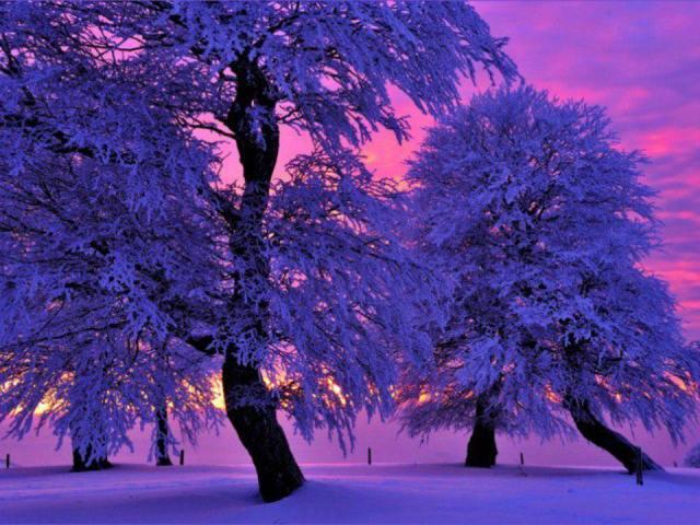purple-trees